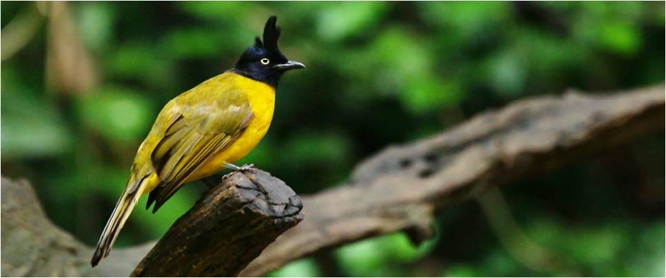 Birds Watching Tour India