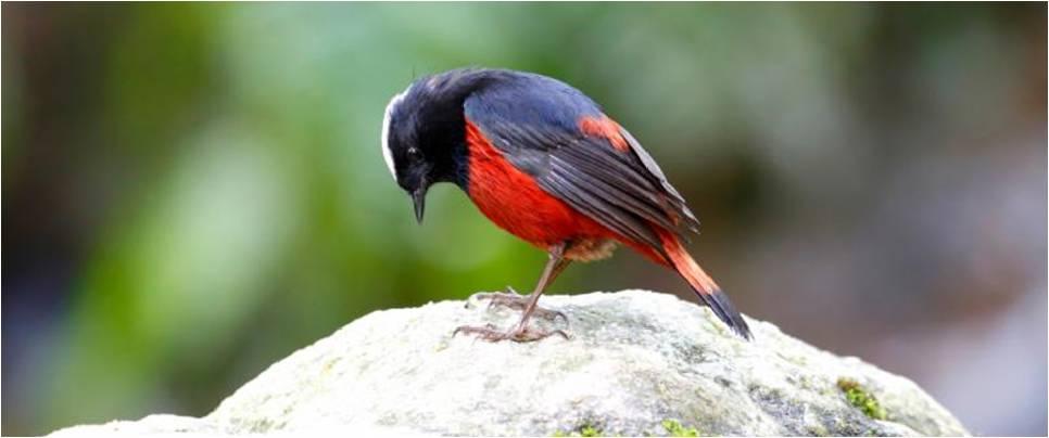 Birds Watching in Rishikesh
