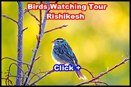 rishikesh birds watching tour