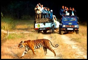 rishikesh-wildlife-sports