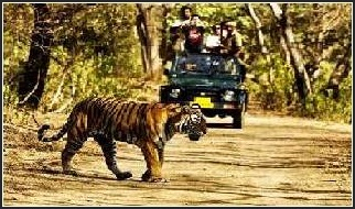 rishikesh rafting camping & wildlife jeep safari packages