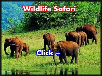 rishikesh-wildlife-jeep-safari-packages